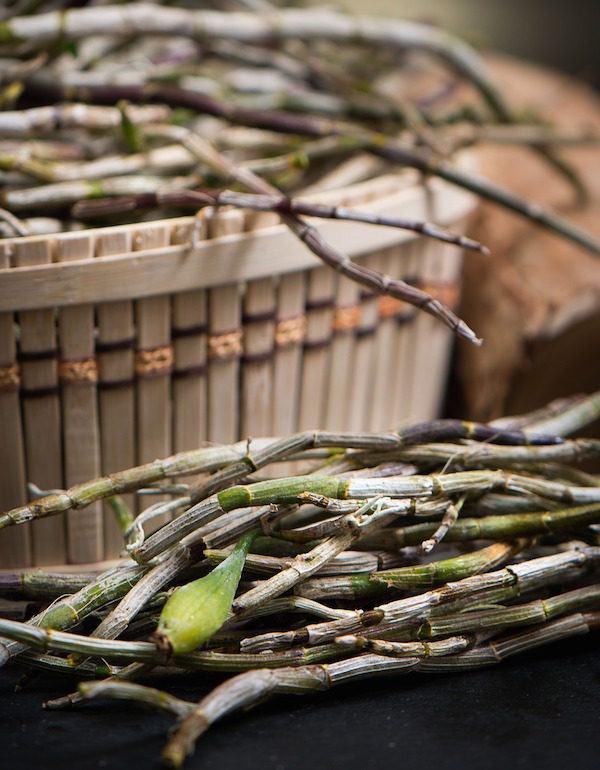 tratamiento-con-plantas-en-medicina-tradicional-china