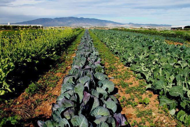 Alimentos-ecológicos-por-qué-consumirlos-Beneficios-propiedades