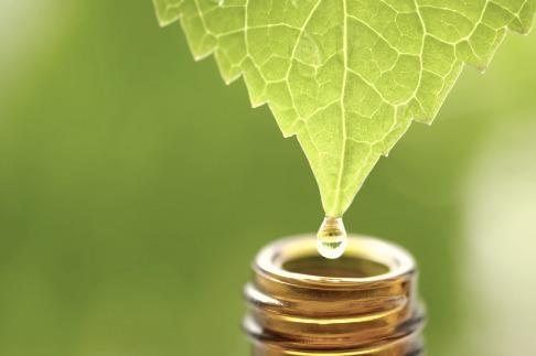 aceite-arbol-del-te-propiedades-y-beneficios-hoja-gotas