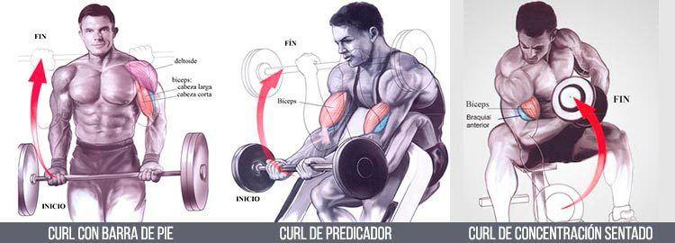 Ejercicios-de-bíceps-Cómo-hacerlos-de-forma-correcta