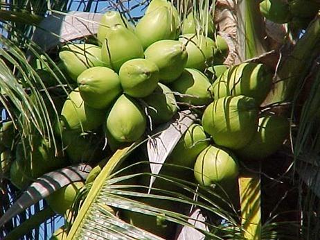 Aceite de coco, propiedades