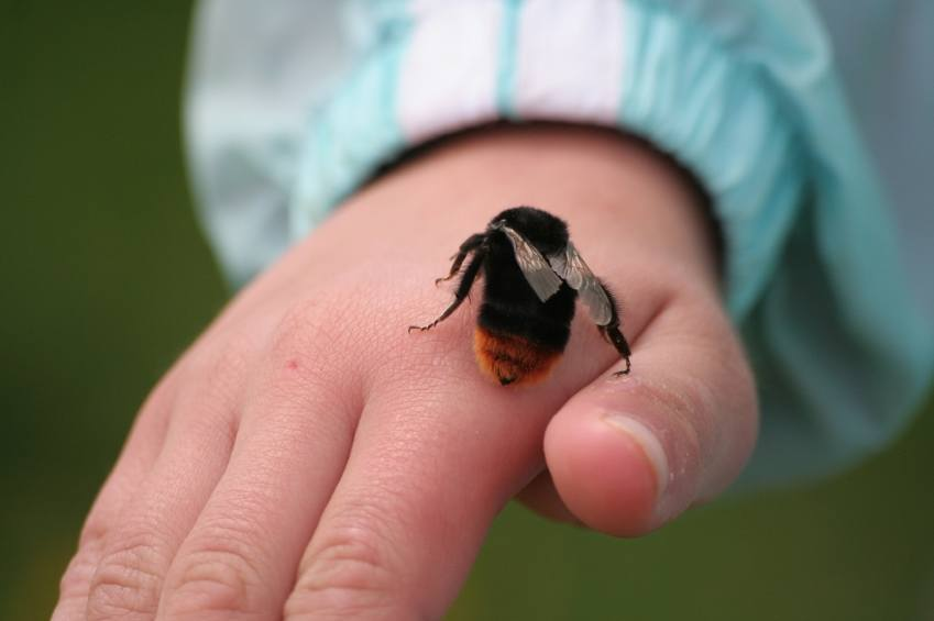 remedios-caseros-para-picadura-de-abeja