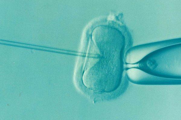 fecundacion-in-vitro-proceso3