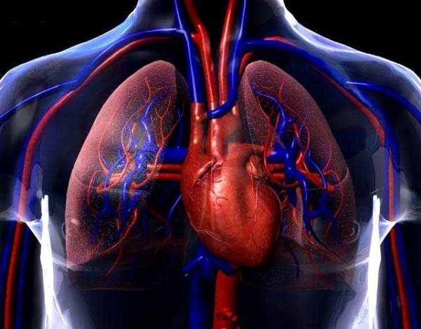 beneficios-del-pepino-para-la-salud-cardiovascular