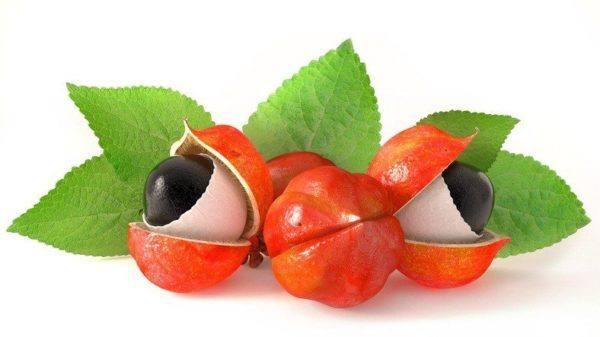 Guarana cuatro frutos