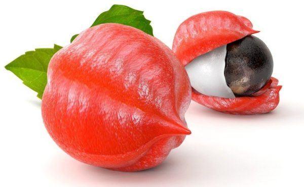 Guarana dos frutos