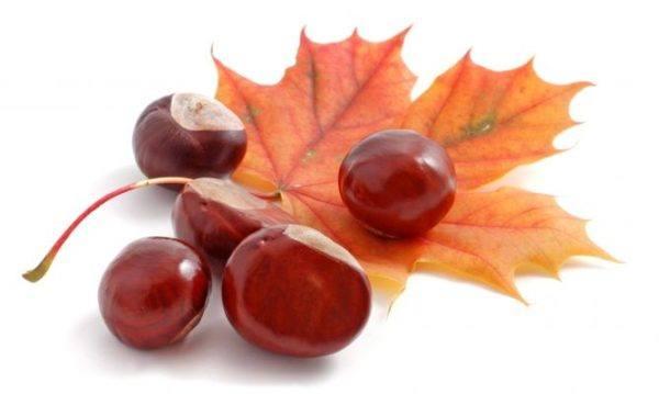 propiedades-de-las-castañas-otoño