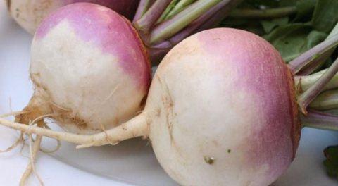 4-verduras-que-se-pueden-plantar-en-la-cosecha-de-otoño-nabos
