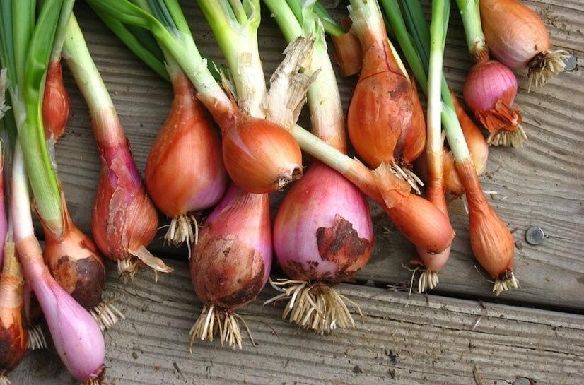 las-7-verduras-de-invierno-para-anadir-al-plato-cebolla