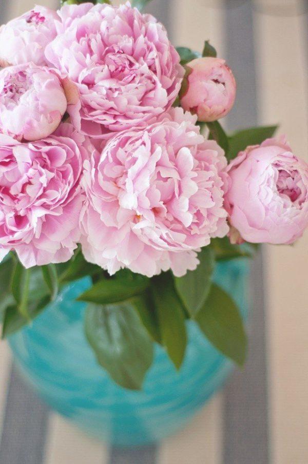 cuales-son-las-flores-de-la-primavera-peonias