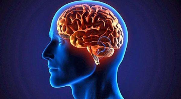 propiedades-y-beneficios-del-cardo-mariano-cerebro