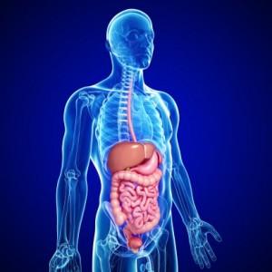 albahaca-contraindicaciones-trastornos-digestivos