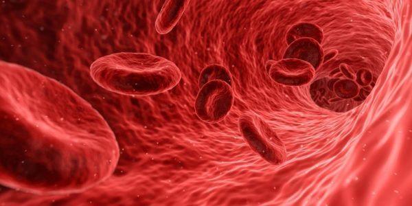 detectar-niveles-altos-de-creatina-en-sangre
