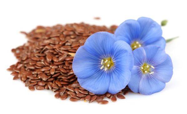 Semillas de lino Que son beneficios propiedades usos y contraindicaciones alcanzar tu peso ideal