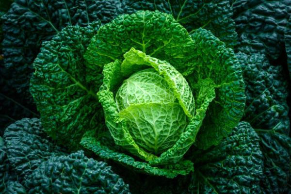 Remedios ciatica hojas de col