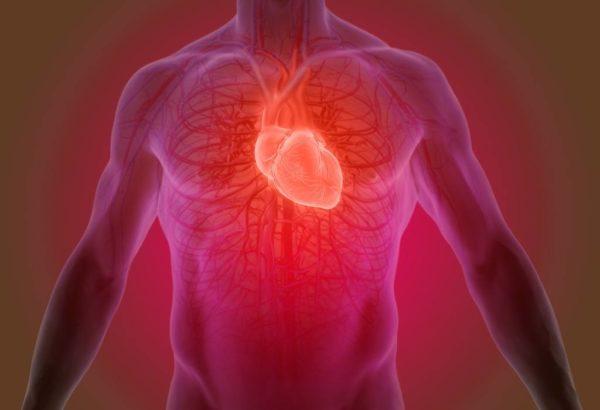 Propiedades y beneficios del te blanco reduce enfermedades cardiovasculares
