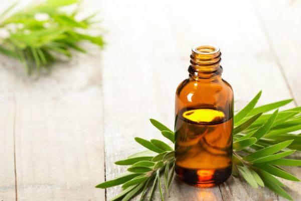 Aceite de arbol de te propiedades beneficos
