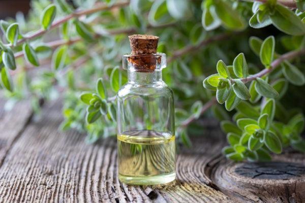 Las hierbas para combatir los triglicridos altos clavo de olor