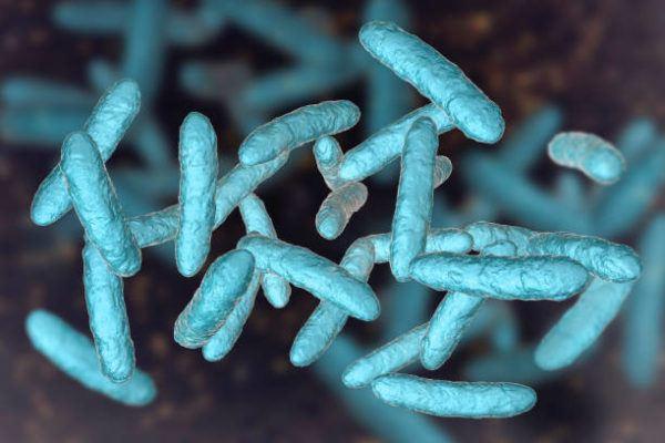 Que es microbiota intestinal funcion tipos alimentos