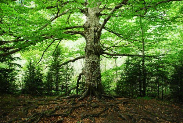 Ecoterapia que es beneficios tecnicas bosque