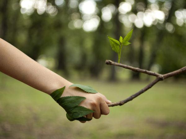 Ecoterapia que es beneficios tecnicas parque