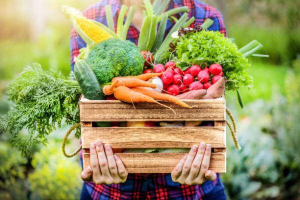 Dietas para adelgazar la dieta del otono 4