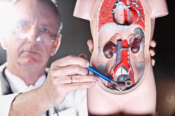 Los mejores remedios naturales para prostata detalle