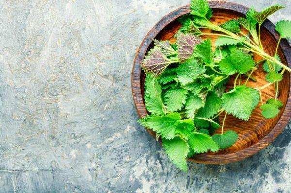 Los mejores remedios naturales para prostata ortiga