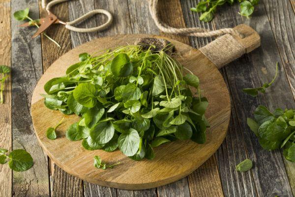 Verduras depurativas desintoxicantes cuales son beneficos propiedades recetas berros
