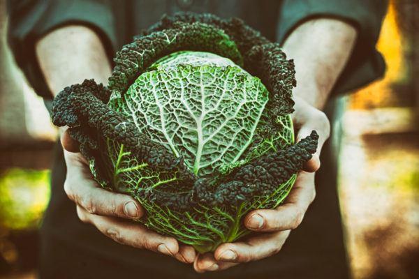 Verduras depurativas desintoxicantes cuales son beneficos propiedades recetas repollo