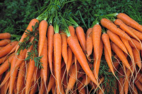 Verduras depurativas desintoxicantes cuales son beneficos propiedades recetas zanahorias