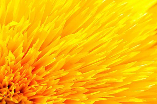 Flores de Otoño –Helenio