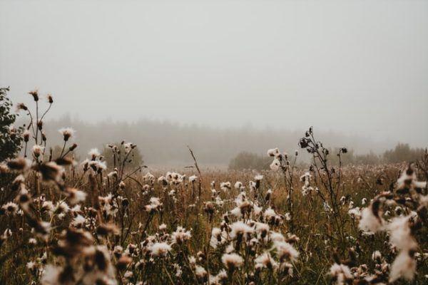Aceite de semilla de algodón: qué es, posibles usos, beneficios y los peligros campo
