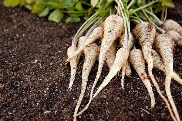 Verduras que se pueden plantar en la cosecha de otono chirivias