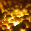 """""""Genisteína"""" la clave de la soja contra el cáncer de mama"""