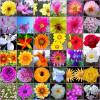 Plantas con flores, aceleran la recuperación después de una cirugía, (II)