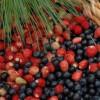 Dieta de Acai Berry, para perder peso