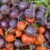 4 verduras que se pueden plantar en la cosecha de Otoño