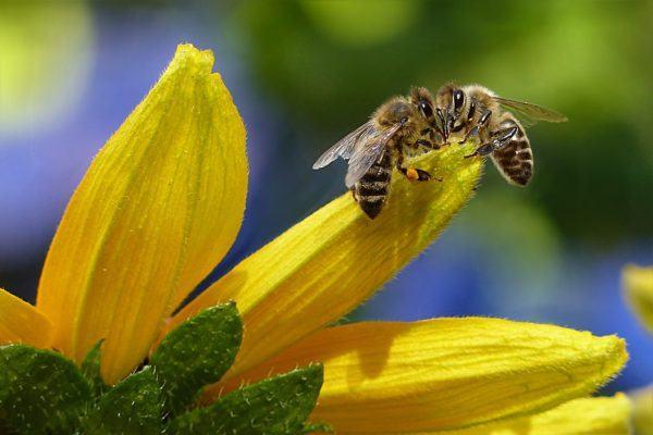 remedios-caseros-con-miel