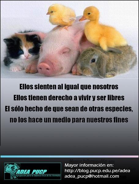 Igualdad Animal Frases De Igualdad Animal