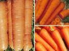 La zanahoria, bronceado natural