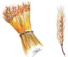 Germen de trigo, facilísimo de consumir