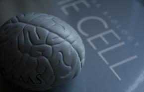 """Disfunción cerebral, una """"Epidemia"""""""
