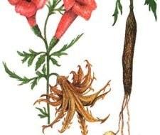 Harpagofito, ideal para los tratamientos de artrosis y artritis