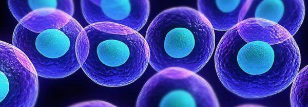 liquidos-corporales-composicion-funcion-propiedades-intracelular