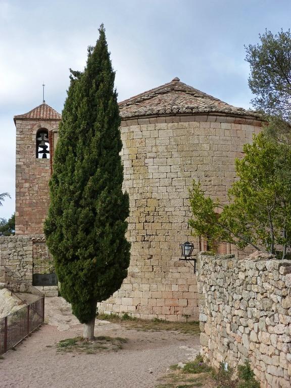 el-ciprés-beneficios-propiedades