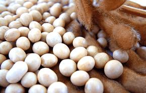La Soja, controversias como Super alimento