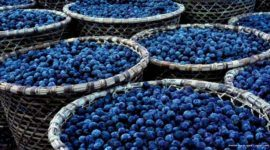 Acai Berry | Propiedades, beneficios y peligros