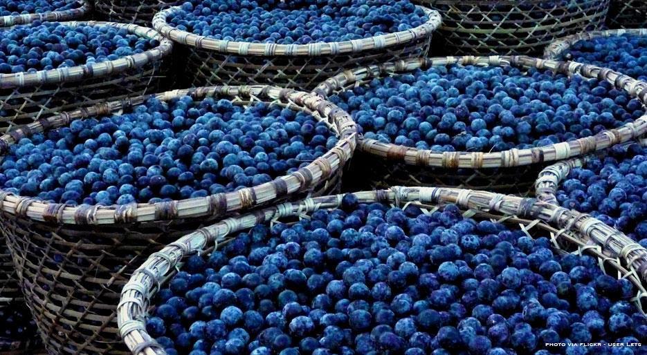 peligros-de-acai-berry