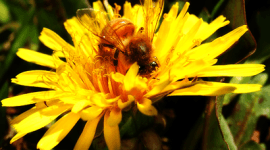 Alergia al Polen: Qué es, causas, síntomas y tratamientos